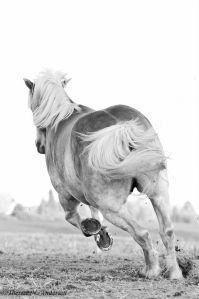 horse running away